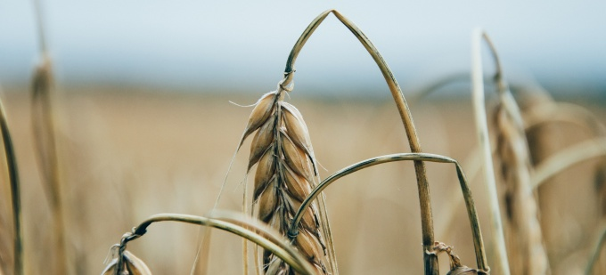 Government to announce new crop insurance scheme this week